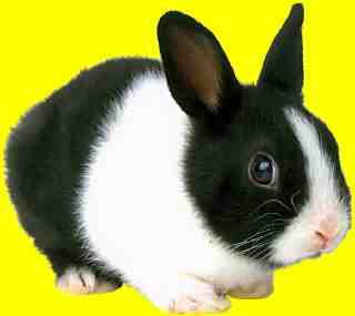 http://www.northlincs.com/micro-site/images/black%20and%20white%20rabbit.jpg
